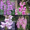 Snapdragon Mix