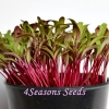 Microgreens - Beetroot - Early Wonder