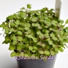 Microgreens - Mustard - Red Giant