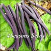 Bush Beans - Royal Burgundy