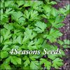 Italian Parsley - Flat Leaf