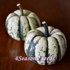 Winter Squash - Sweet Dumpling