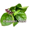 Ceylon Spinach - Red Stem (Malabar Spinach)