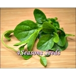 Ceylon Spinach - Green Stem (Malabar Spinach)