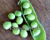 Shelling Pea (Bush) - Massey Gem (Melbourne Market, Super Gem)