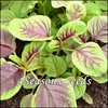 Amaranth Greens - Bicolour