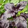 Basil - Purple Ruffles
