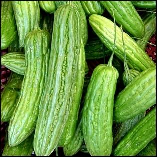 bitter melon canton green f1 4seasons seeds