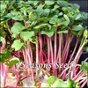 Microgreens - Leaf Radish - Triton Purple