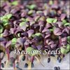 Microgreens - Basil - Purple