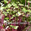 Microgreens - Red Cabbage